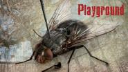 """""""Playground"""" – Grausamkeiten der Jugend"""