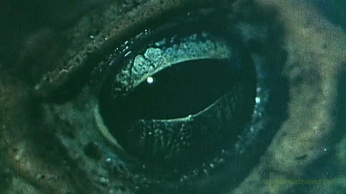 """4. Schocktober: Horror for Future #1: """"Die Frösche"""" (1972)"""