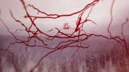 """Arctic Circle"": Pandemie, Isolation, Zukunftsangst"
